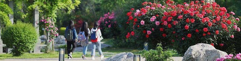 西安工业大学 (本科)