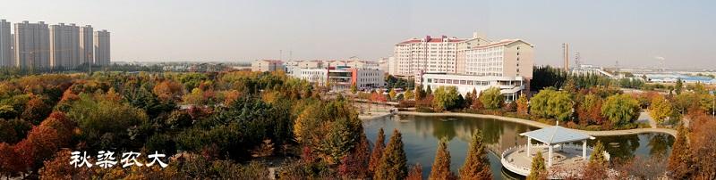 河北农业大学(本科)