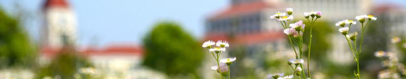 上海师范大学(本科)
